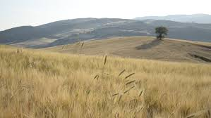 dry grass field background. Dry Grass In Wheat Field, Moving At Wind With Landscape On Background. Stock Footage Video 5518397 | Shutterstock Field Background E