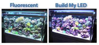 build my led goes head to head with t5 fluorescent lighting gear reef builders the reef and marine aquarium blog