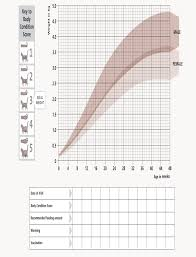 Kitten Size Chart Kitten Growth Chart From Hills Kitten Growth Chart