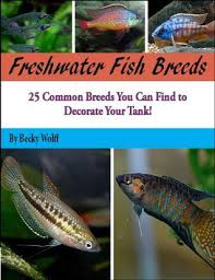 Freshwater Fish Identification Chart Freshwater Fish Breeds By Becky Wolff
