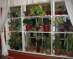 indoor window garden. plant shelf window treatement indoor garden