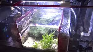 Freshwater Sump Design Best Aquarium Sump Refugium In 2019 Reviews Fish Tank