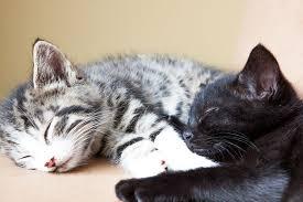 Kitten 8 weken bij moeder weg