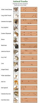 Animal Track Identification Animal Footprint I D Chart