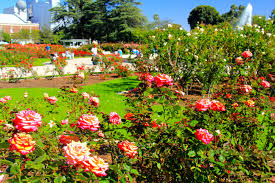 file exposition park rose garden exposition blvd at vermont ave university park 10 jpg