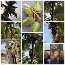 36 Palms Boutique Retreat 36 Palms Kochi India Facebook