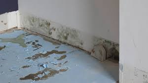 mold on drywall shouldclean up or replace home improvement how to remove black from basement walls 3deng removing mold i51