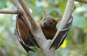 Image result for bat images