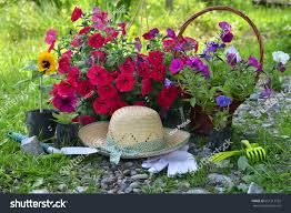 cute garden tools beautiful summer background flowers garden tools stock photo