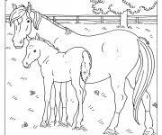 Kleurplaat Pony Met Veulen 78 Mooi Kleurplaat Veulen Kleurplaat