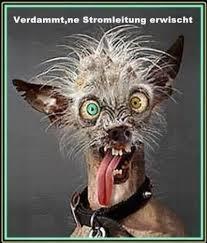 Verdammte Ne Stromleitung Erwischt Sprüche Lustige Bilder
