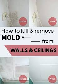 how to kill bathroom mold. How To Get Rid Of Bathroom Mold On Walls Kill Remove From .