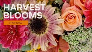 stevensville florist pea fl
