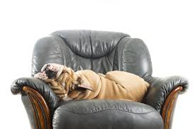 the dog trainer how to keep dogs off furniture dog trainer quick and dirty tips