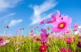 Bienvenida Primavera! – Clinica Tajy