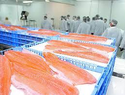 Resultado de imagen para cultivo del salmon