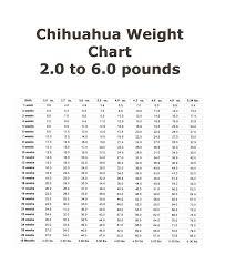 Teacup Chihuahua Size Chart 49 Paradigmatic Chihuahua Chart