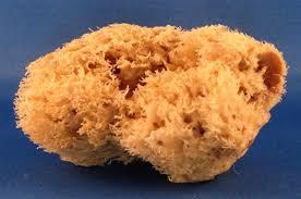 sea-wool-sponge-main-resized