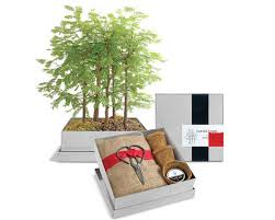 dawn redwood bonsai gift set recycled steel container indoor garden holiday small es office forest house plant 50 00 usd by