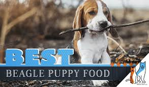 Beagle Puppy Feeding Chart 7 Best Puppy Foods For Beagles With Our 2019 Feeding Guide