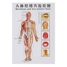 Acupuncture Chart Poster Amazon Com Gggarden 7pcs Set Human Acupoint Map English