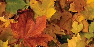 Pourquoi les feuilles d'automne sont rouges, oranges ou jaunes? | Le  Huffington Post LIFE