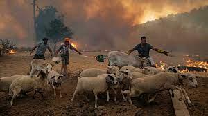 حرائق غابات ضخمة تتسارع باتجاه محطة طاقة حرارية في تركيا - فرانس 24