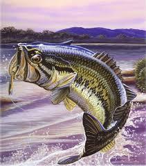 fish artwork fish paintings kayak fishing fishing stuff fishing fish drawings largemouth bass black bass fish outdoors
