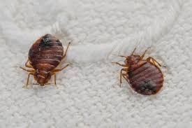 Get How To Control Bed Bugs At Home Background