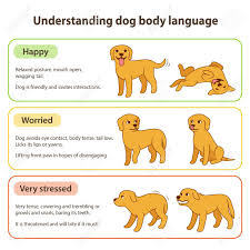 Pet Animal Picture Chart Dog Body Language Infographic Chart Understanding Dog Poses