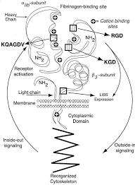 An Ii B B A Critical Appraisal Of Platelet Glycoprotein Iib Iiia Inhibition