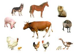 Прирученные животные Удивительный Мир Животных