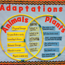 Plant And Animals Adaptations Venn Diagram A Good Way To Compare And Contrast Animals And Plants Is To Use A