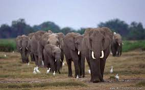 Group Of Elephants Wallpapers ...