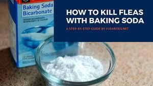 baking soda flea control guide