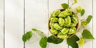 Hop Wheel Chart Mosaic Hops The Fruity Hop Variety That Changed Craft Beer