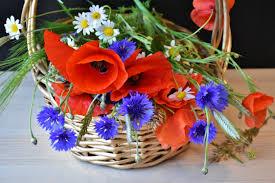 Images Gratuites La Nature Fleur Floraison Printemps Fermer