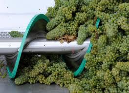 Risultati immagini per diraspatura dell'uva