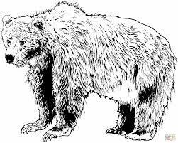 Small Picture Cub For Kids And All Ages Polar Bear Coloring Page Bear Cub