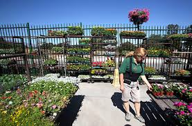 armstrong garden center locations. Beautiful Locations But According To Vicky Perez A Nursery Professional At Armstrong Garden  Center In Claremont There Are Plenty  To Locations