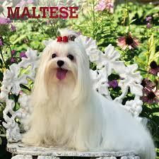 maltese breed dog lover merchandise