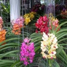 avt gardenia garden centre photos malloossery kottayam seed retailers