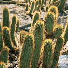 desert plants with names. Modren Names Landscape Plants For The Arizona Desert  Municipal Water Users  Association For With Names Amwua