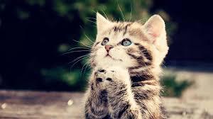 cute kitten wallpaper wallpaper