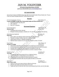 Successful Resumes Examples Examples Of Resumes
