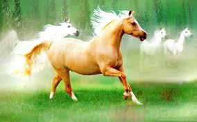 beautiful horses running wallpaper. Widescreen And Beautiful Horses Running Wallpaper