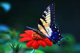 Wonderful Butterfly Free Desktop Wallpaper Backgrounds Wallpaper