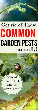 your vegetable garden is your pride and joy so how do you keep pests from