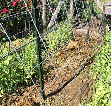 how to stop weeds 2 a thick layer of straw or seed free mulch