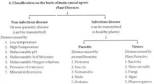 essay on plant diseases classification of plant diseases classification of plant disease on the basis of causal agent